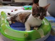 Baby Katze Kitten Raja geimpft
