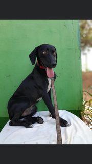 Rüde Hund Billy 1 Jahr