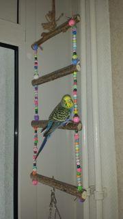 Vogelzubehör Vogelleiter Vogelstange Vogelsitz