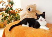 Schüchternes Katzenmädchen 6 Jahre sucht