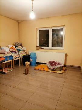 Die ängstliche Whoopy sucht ein: Kleinanzeigen aus Hattingen Baak - Rubrik Hunde