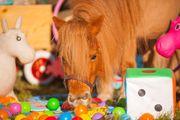 Gabis Ponybande Reittherapie